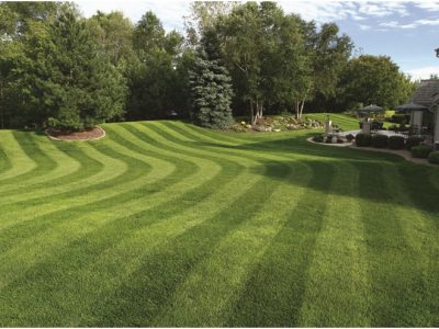 Have you done lawn striping before